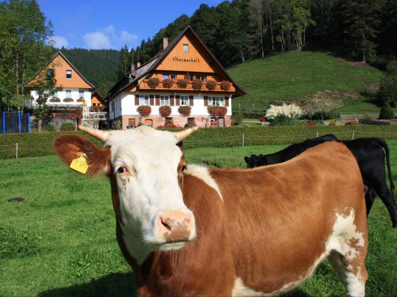 Bauernhof Hansenhof